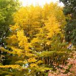 Jardín Botánico de Madrid en Otoño